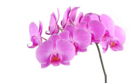 blomster hillerød frederiksværksgade